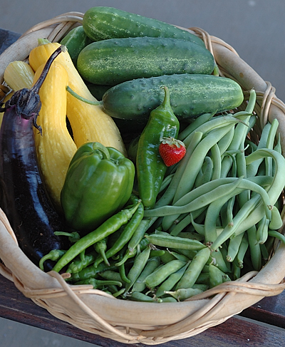 Vegetable Harvest from My Garden