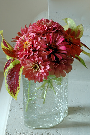 Homegrown Zinnia