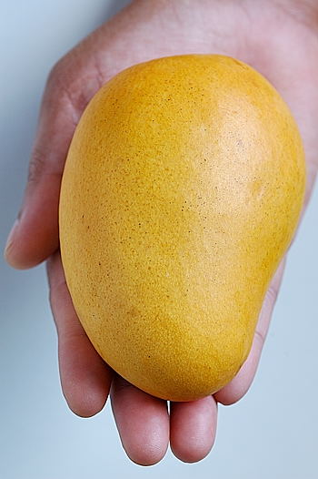 Mango from My Hand